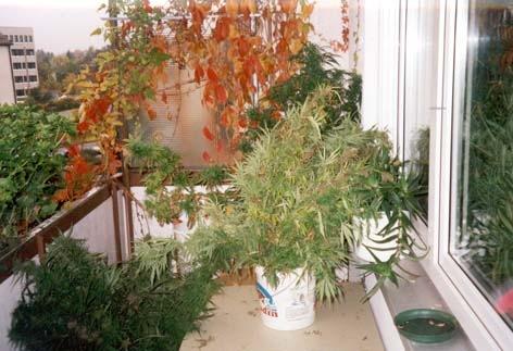 POL-MFR: (3) Hanfplantage entdeckt