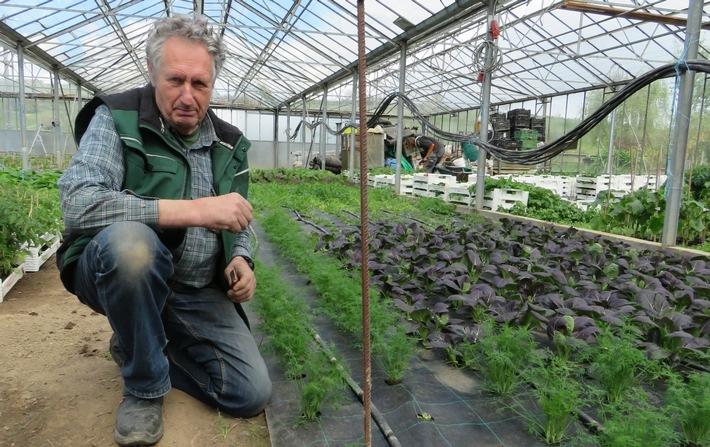 Gärtnerei Berg: Lebendiger Boden ist der beste Pflanzenschutz