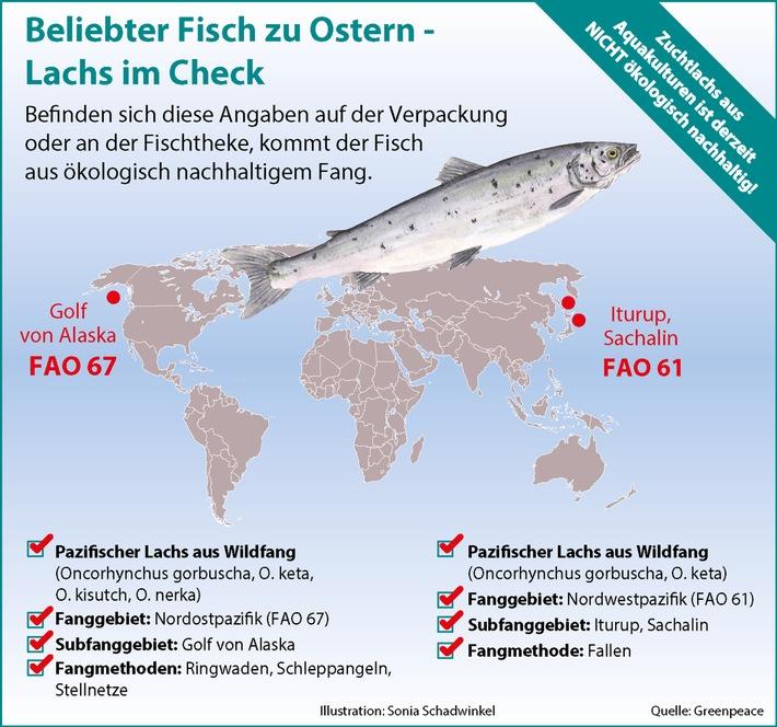 Greenpeace: Zu Ostern den richtigen Fisch wählen / Wie erkenne ich beim beliebten Speisefisch Lachs ein ökologisch vertretbares Angebot?