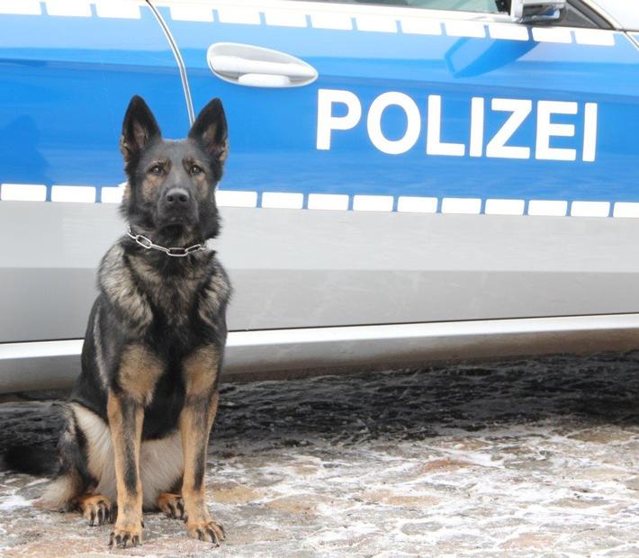 pol hh 160622 1 diensthund akfa stellt mutma lichen fahrraddieb pressemitteilung polizei. Black Bedroom Furniture Sets. Home Design Ideas