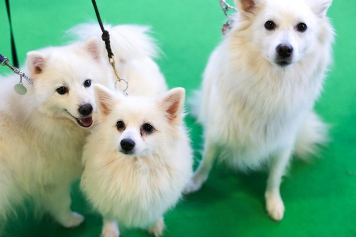 Grüne Woche 2017: Hundstage schon im Januar - Erlebniswelt Heimtiere garantiert tierischen Spaß
