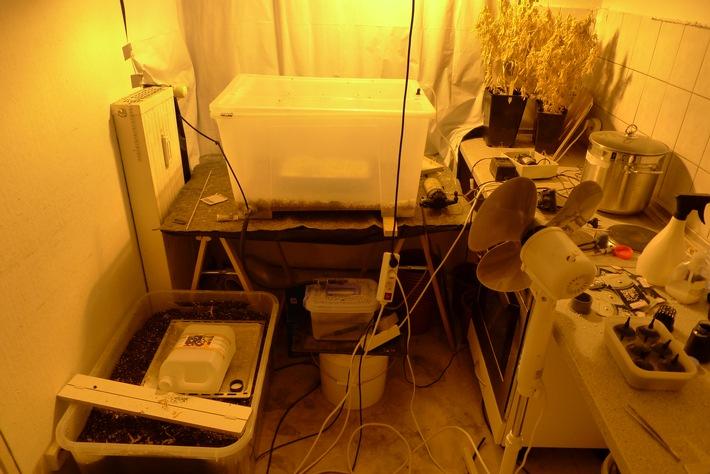 LKA-SH: Cannabis-Indoor-Plantage ausgehoben