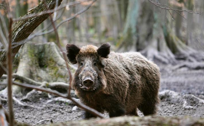 Durchgeknallt - Was bei der Jagd falsch läuft / Dokumentation von Lutz Wetzel am Mittwoch, 29. Juni 2016, 21 Uhr im SWR Fernsehen