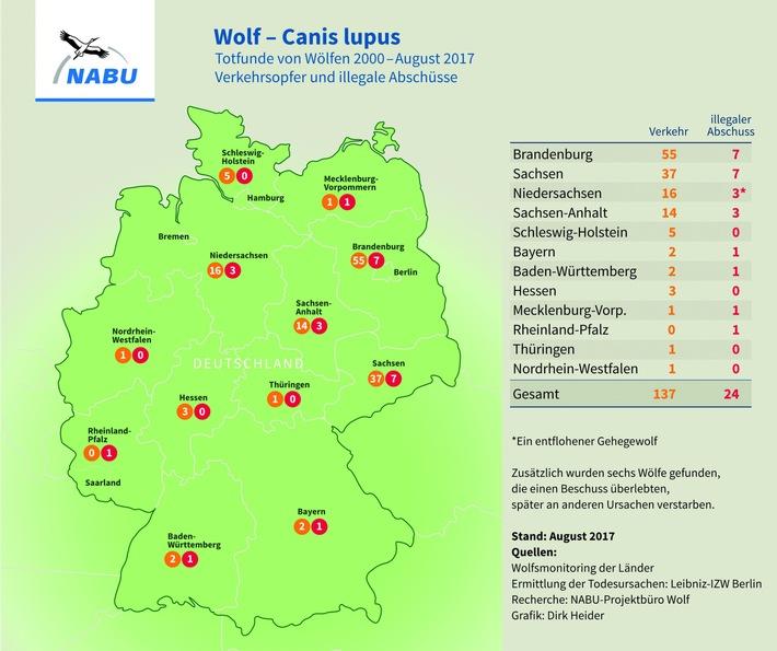 NABU: Wolf in Baden-Württemberg illegal erschossen - 24. Fall in Deutschland / Politik darf illegale Tötungen mit Forderung nach Abschussquote nicht salonfähig machen
