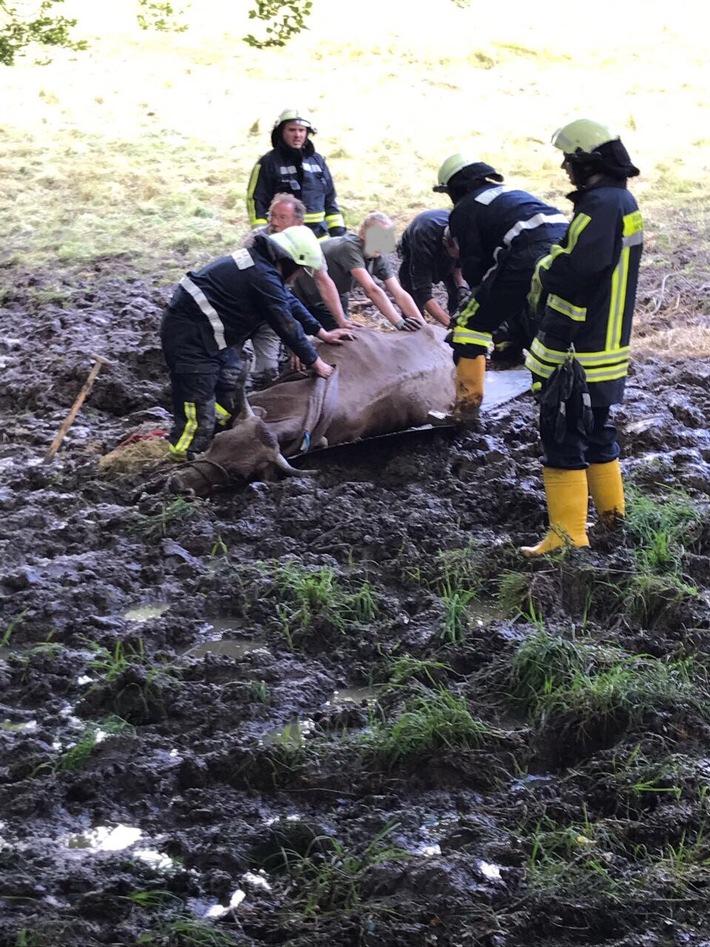 FW-EN: Feuerwehr Hattingen rettet eingesunke Kuh