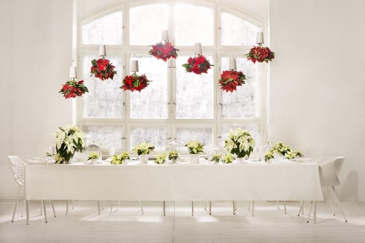 Weiß wie Schnee, rot wie Blut, schwarz wie Ebenholz / Überraschende Inszenierung: eine märchenhafte Dinnertafel mit dem Weihnachtsstern