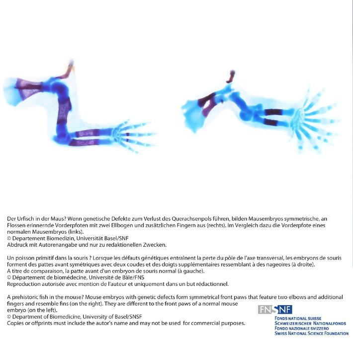 SNF: Bild der Forschung Mai 2011: Entwicklungsbiologie