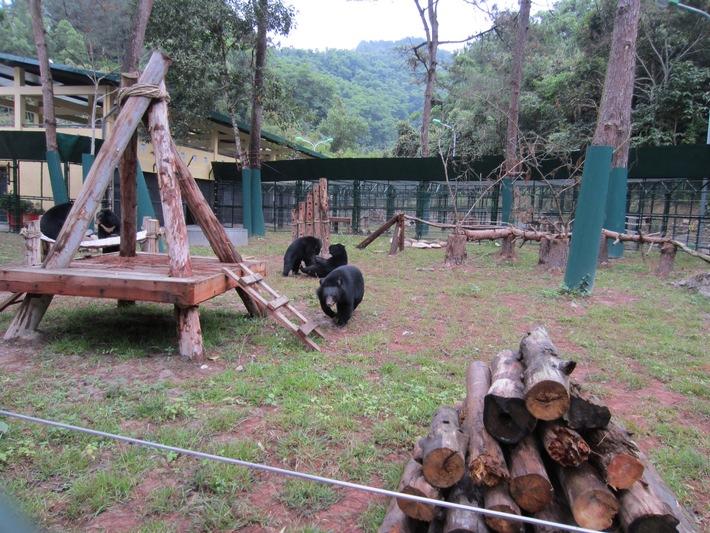Vietnamesisches Rettungszentrum für Bären vor Ausweisung gerettet