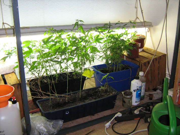 POL-H: Cannabis-Indoorplantage aufgefunden                          Levester Straße / Oberricklingen