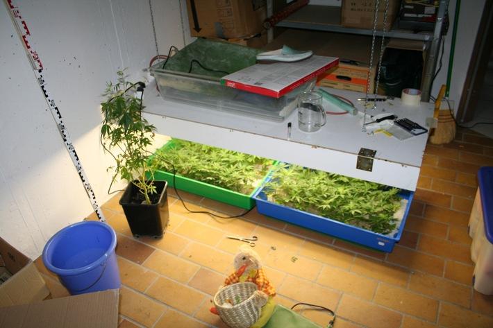POL-DA: Seeheim-Jugenheim: Nicht nur unter der Bettdecke fündig geworden / Aufzuchtanlage mit 135 Hanfpflanzen sichergestellt