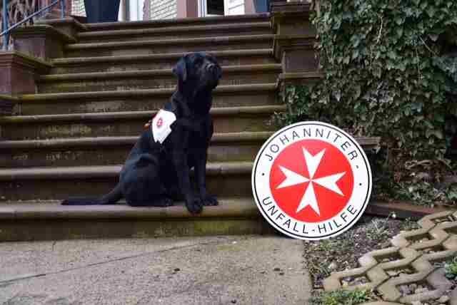 POL-HOL: Glücklicher Ausgang nach Rettungshundeeinsatz:<br /> 86jährige Seniorin durch Rettungshund rechtzeitig wieder aufgefunden<br /> &#8211; Ältere Dame hatte sich beim Spaziergang verlaufen -&#8221; />Rettungshund Dundee als strahlender Held, der nicht nur durch die Leckereien und verabreichten Streicheleinheiten weiß, dass er eine ganz besondere Leistung abgegeben hat.  </p> <p>Hameln  &#8211; Einen ausgesprochen glücklichen Ausgang nahm in der vergangenen Nacht die Suche nach einer 86jährigen Frau aus Holzminden, die seit den Vormittagsstunden vermisst wurde. Dundee, ein achtjähriger Labrador Retriever und ausgebildeter Johanniter-Rettungshund war der strahlende Held, der die ältere Dame kurz nach 02:00 Uhr in der Nacht zum heutigen Samstag auf dem Bundeswehrübun</p>         </div><br />         <div class=