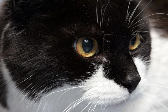Gefährlicher Bakteriencocktail: Katzenbisse sind nicht harmlos