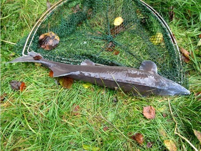 Lediglich ein toter Fisch blieb in den Teichanlagen zurück