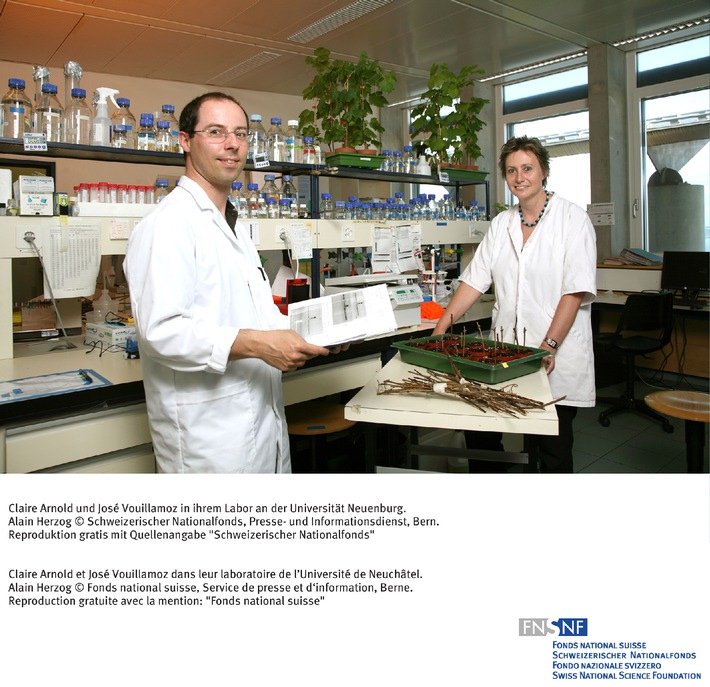 SNF: Bild des Monats Juni 2006: Grosse Vielfalt bei schweizerischen  Rebsorten