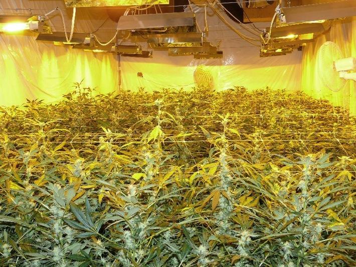 POL-DN: Professionellen Plantagenbetreiberring aufgedeckt