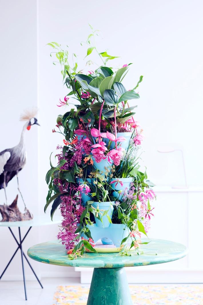 Kängurublume, Gloriosa und Medinilla bringen den Sommer / Tropenschönheiten sind Zimmerpflanzen des Monats Mai