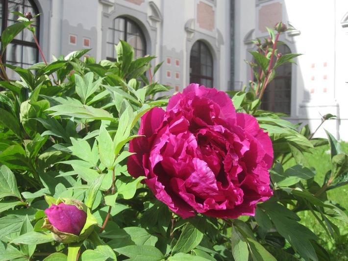 Gärten im Klösterreich: Orte der Ruhe und inneren Einkehr