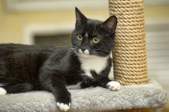Heimtiere sind beliebt / Hund, Katze, Hamster, Maus - welches Tier passt zu mir?