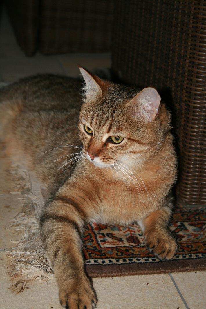 Heute ist Weltkatzentag: VIER PFOTEN ruft zur Kastration von Hauskatzen auf (BILD)