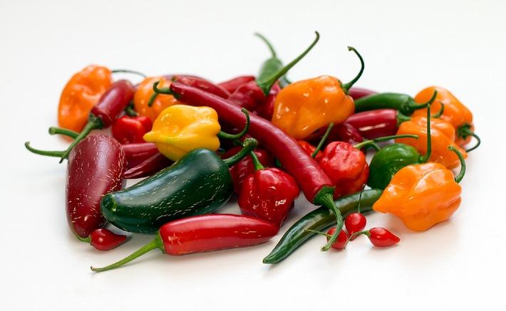 Chili-Anbau bringt Spaß und Genuss / Jetzt ist die richtige Zeit, die Saat in die Erde zu bringen / Chili-Experte Harald Zoschke gibt Tipps für den Chili-Anbau zuhause
