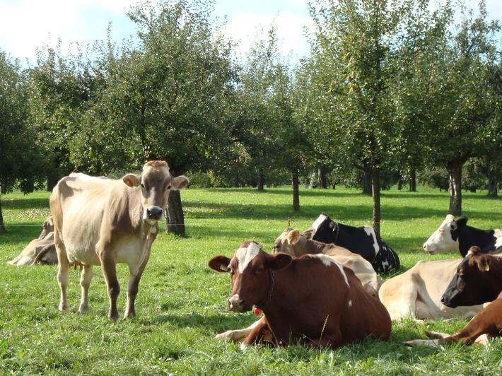 Migros e IP-Suisse lanciano il latte dei pascoli TerraSuisse