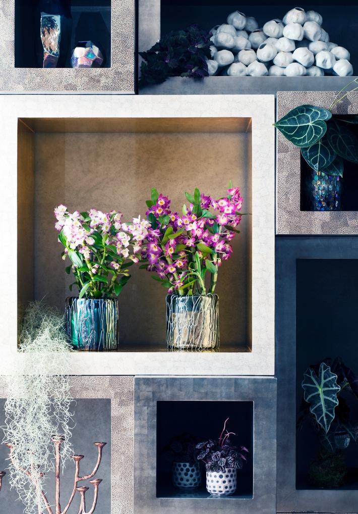 Edle Orchideen sind Zimmerpflanzen des Monats November / Surreale Blütenköpfe mit extra viel Eleganz