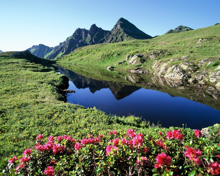 Almrosentage: Farbenfest im Alpbachtal
