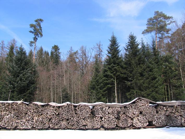 Holzenergie für jedes vierte Schweizer Haus