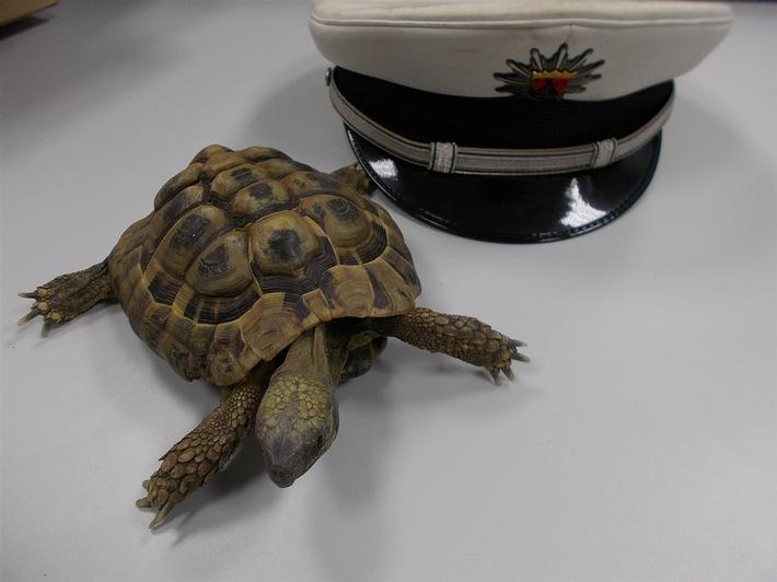 POL-PDLU: Landschildkröte auf Abwegen