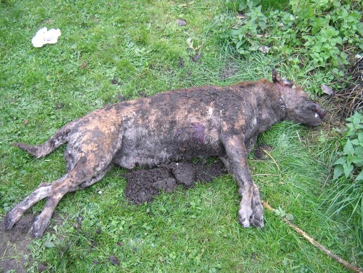 POL-HI: Schäferhund- Mischling grausam getötet.
