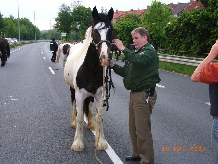 POL-HI: Pferdeflüsternder Polizeibeamter stoppt Ausflug einer reislustigen Herde