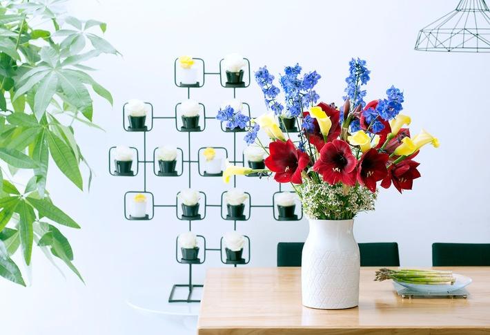 Das Amaryllis-Formspiel: Kunstwerke aus der Natur / Winterlicher Blumenklassiker zeigt moderne Seite