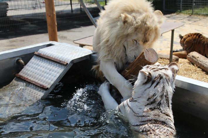 """Das Aktionsbündnis """"Tiere gehören zum Circus"""" appelliert an den Leipziger Stadtrat, sich von dem Gedanken eines Wildtierverbotes zu distanzieren"""