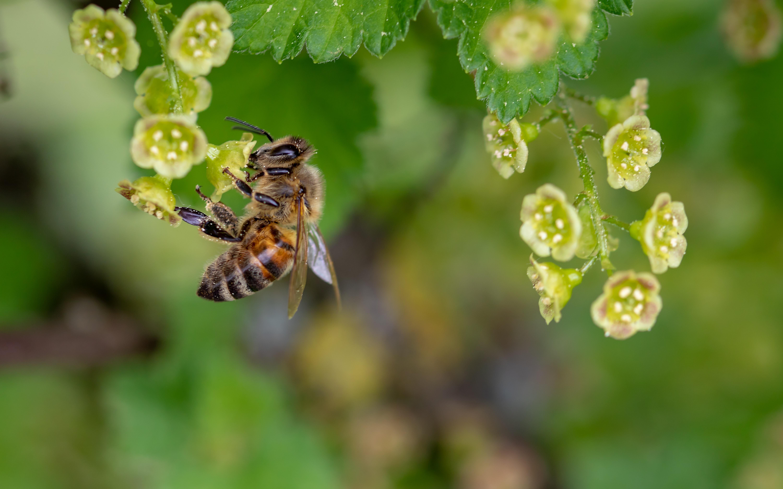 Nahrung Fur Die Bienen Nicht Nur Zum Weltbienentag Am 20 Mai