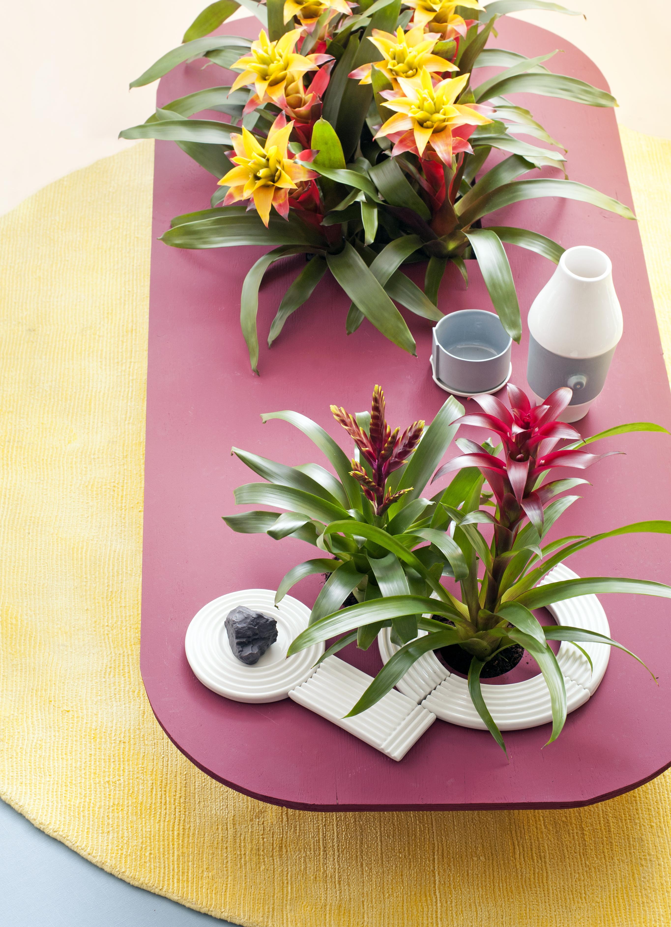 Eitelkeit Welche Blumen Blühen Im März Das Beste Von ▷ Bromelie Ist Zimmerpflanze Des Monats März