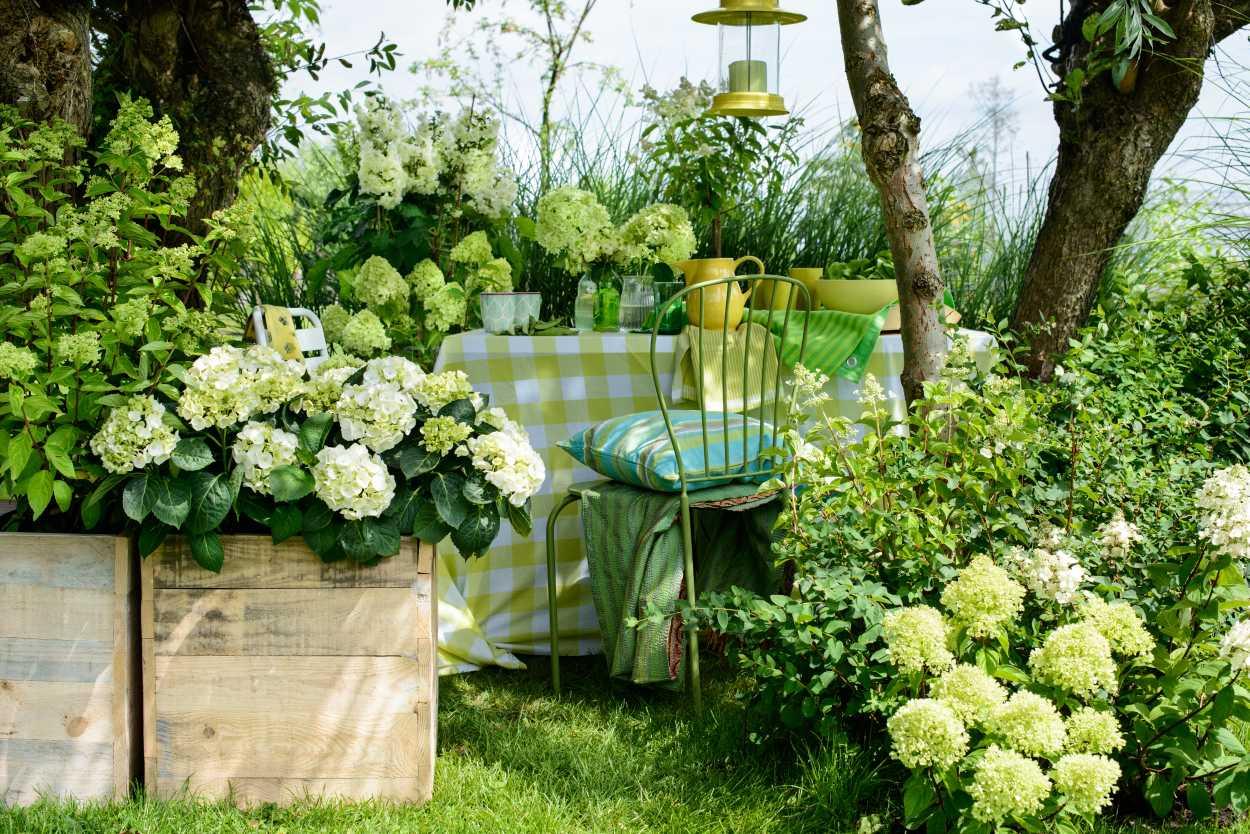 beschwingter start in die gartensaison mit der hortensie es gr nt so gr n die ppige. Black Bedroom Furniture Sets. Home Design Ideas