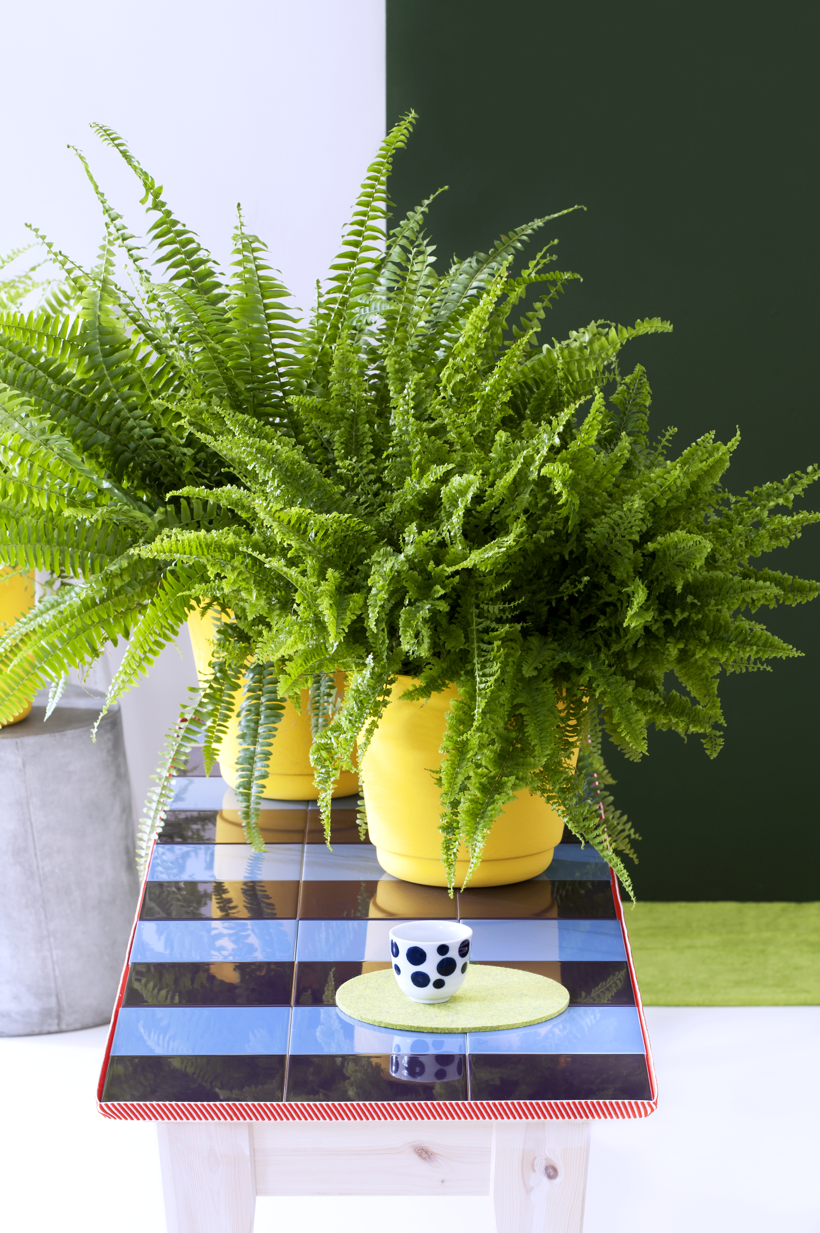 Erfrischende Zimmerpflanzen sind Zimmerpflanzen des Monats Oktober ...