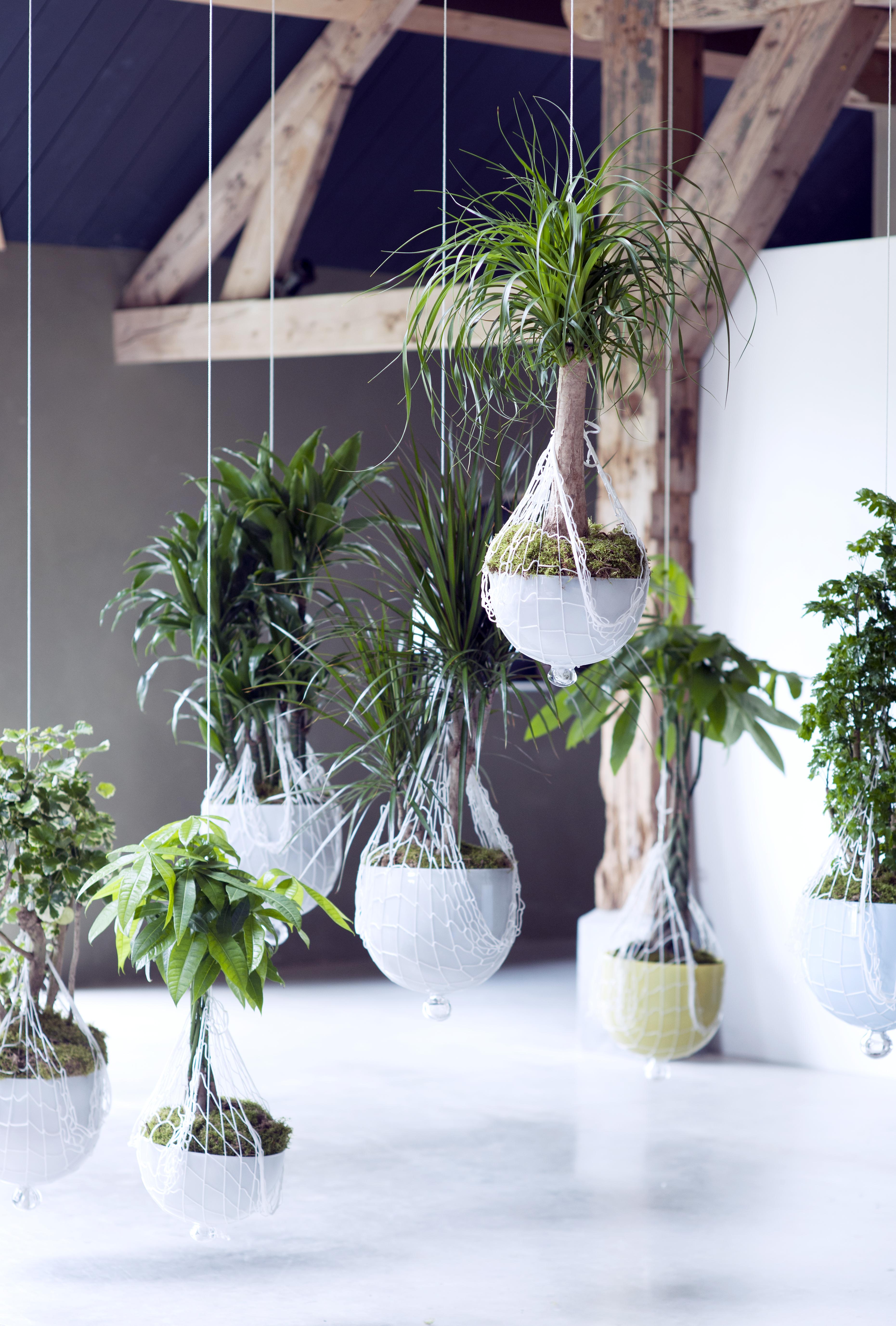 Zimmerpflanzen Schattig zimmerbäume sind zimmerpflanzen des monats januar drachenbaum