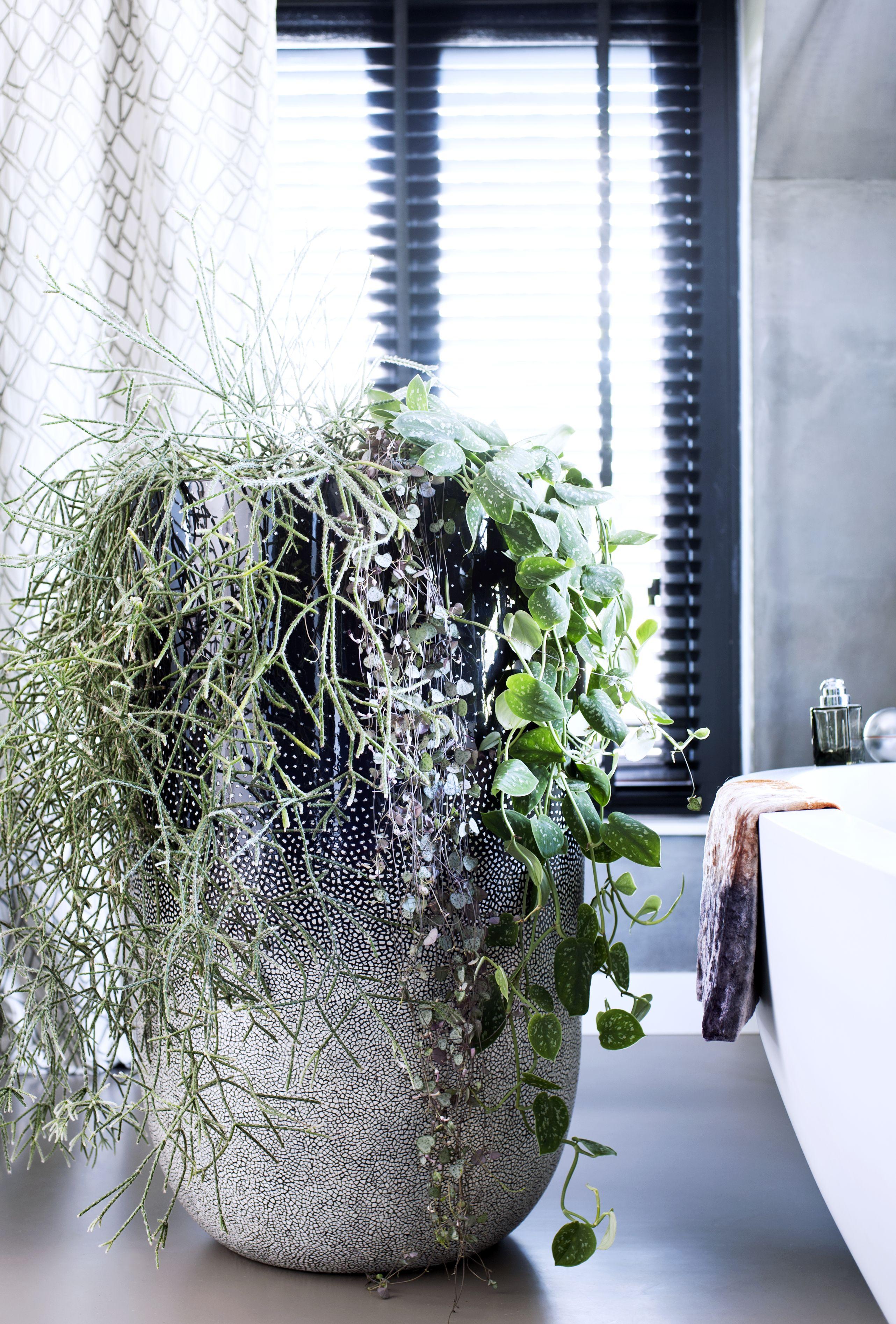 Pflanzen Im September hängende zimmerpflanzen sind zimmerpflanzen des monats september
