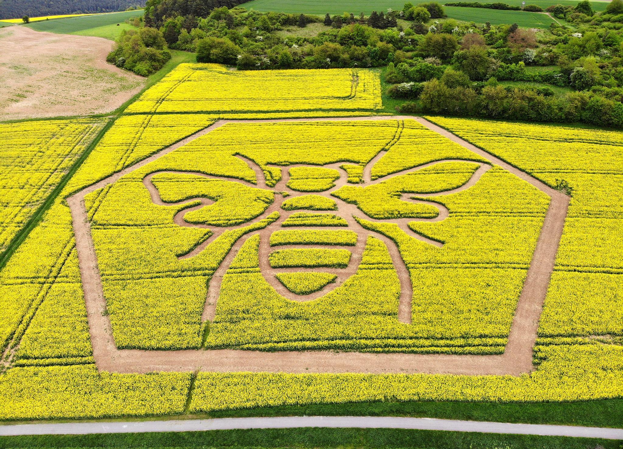 ▷ Weltbienentag 2019 - 20. Mai ist World Bee Day | Presseportal