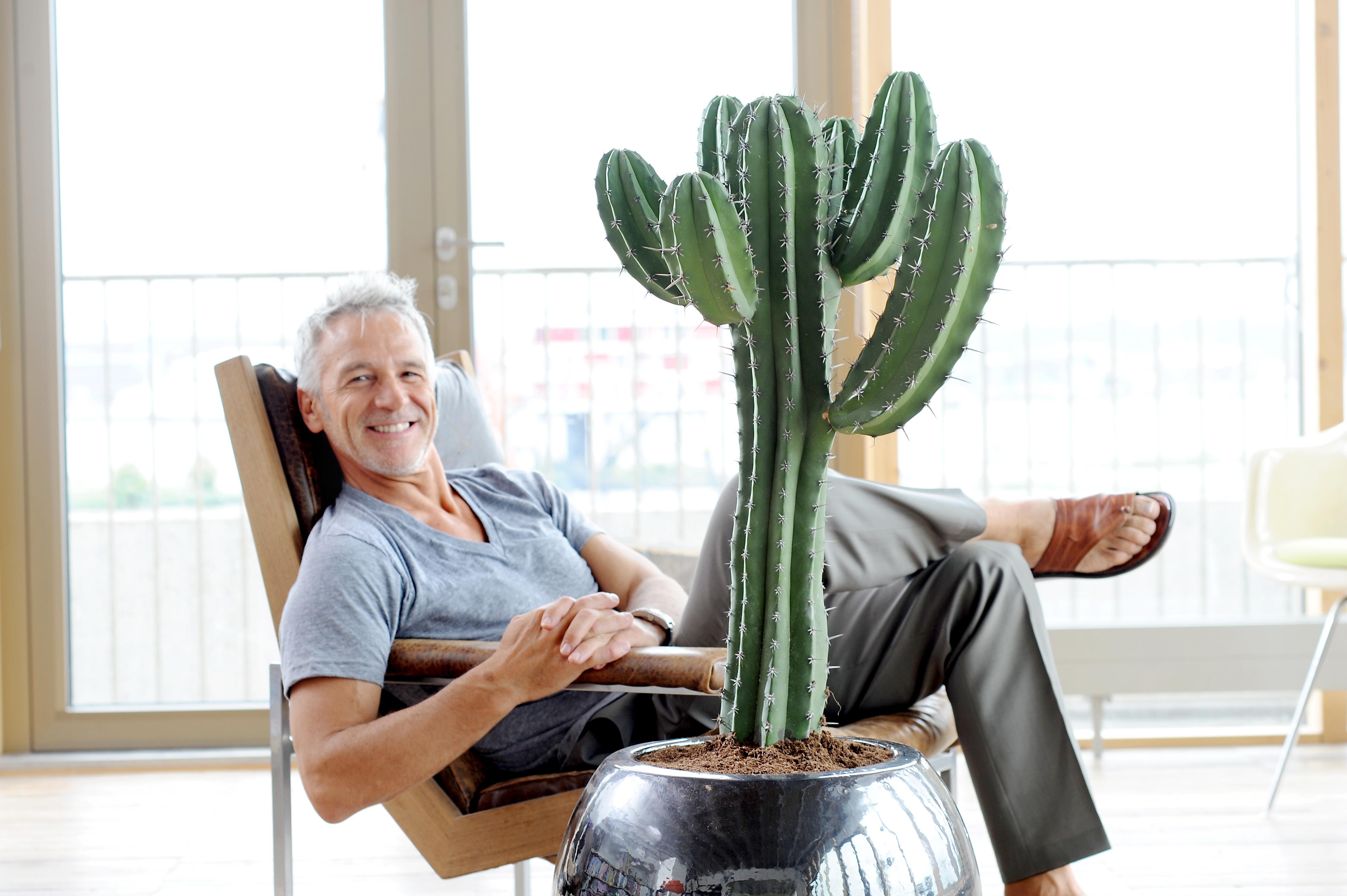 Kaktus ist zimmerpflanze des monats juni harte schale weicher kern der kaktus ist eine - Kaktus zimmerpflanze ...