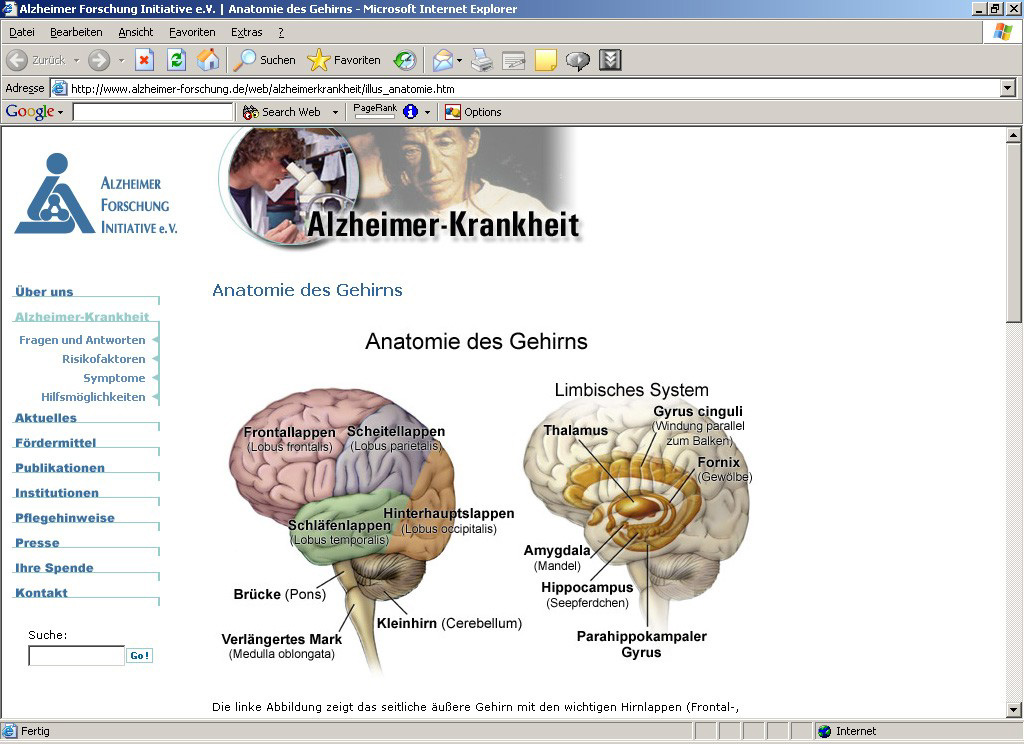 ▷ 10 Jahre Alzheimer Forschung Initiative e.V. - Neuer ...