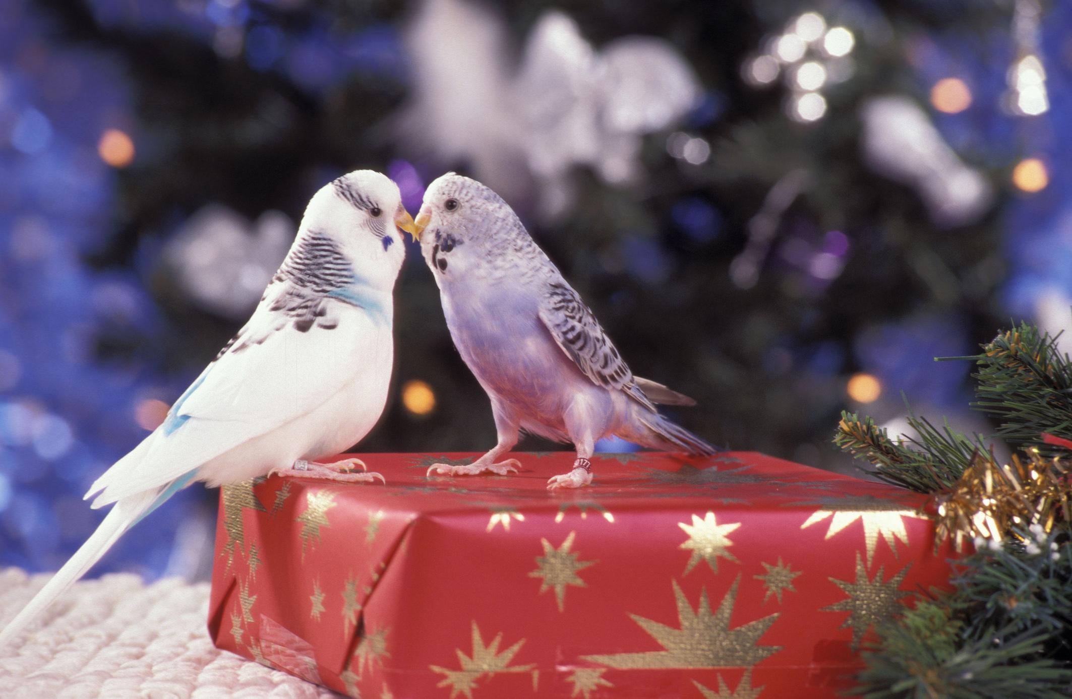 Bilder Weihnachten Tiere.Zzf Pressemeldung Weihnachten Kein Umtausch Von Tieren