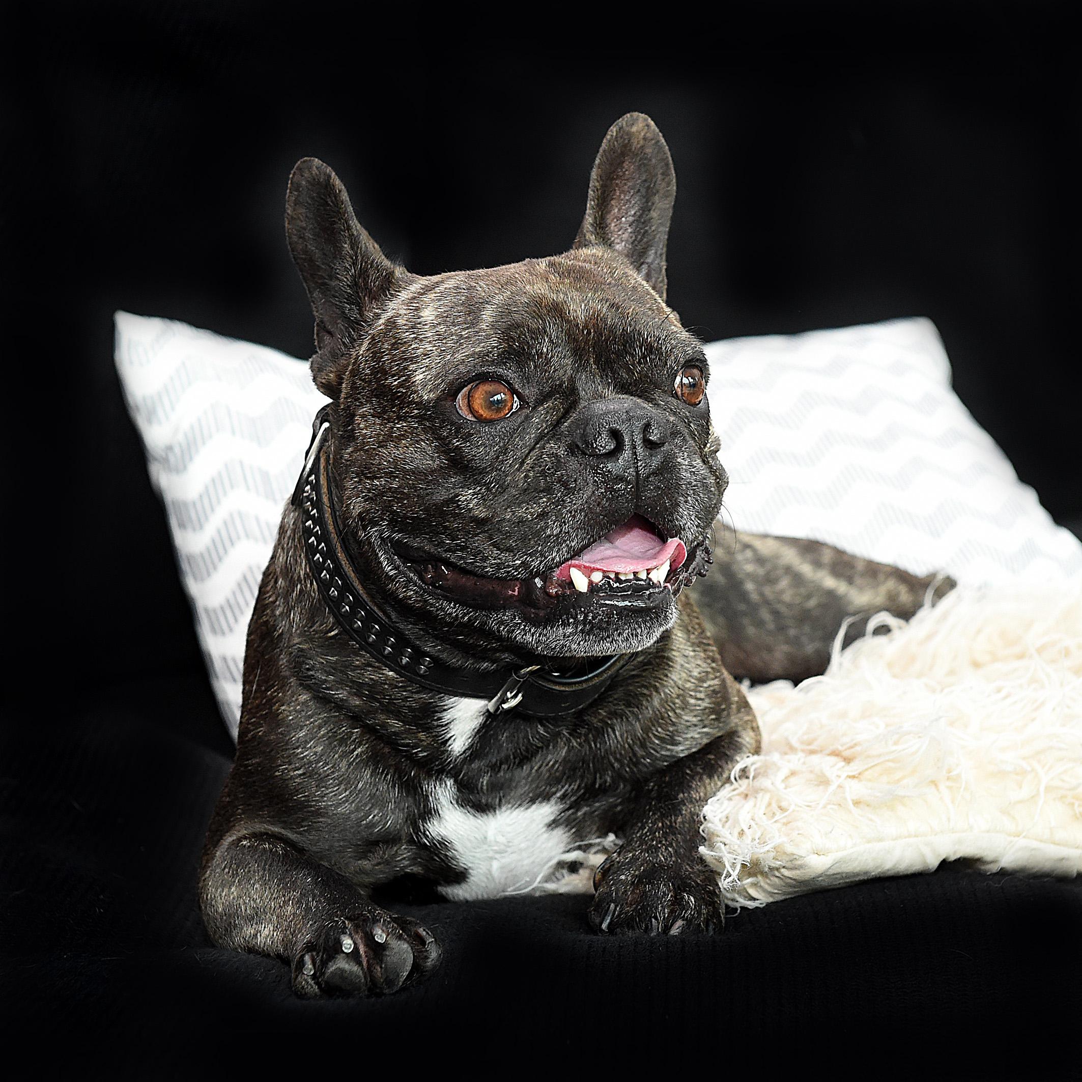 hund und katze f hlen sich wohl im smart home presseportal. Black Bedroom Furniture Sets. Home Design Ideas