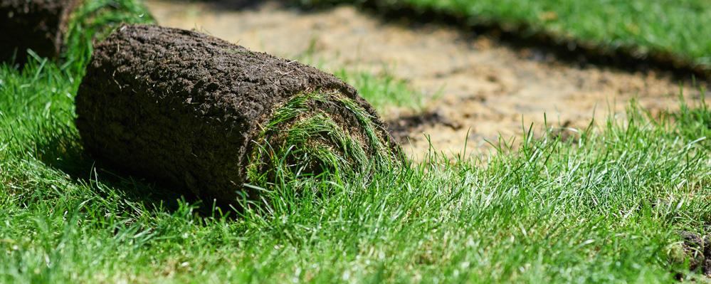 Etwas Neues genug ▷ Mit Rollrasen schnell den Garten begrünen   Presseportal #EP_46