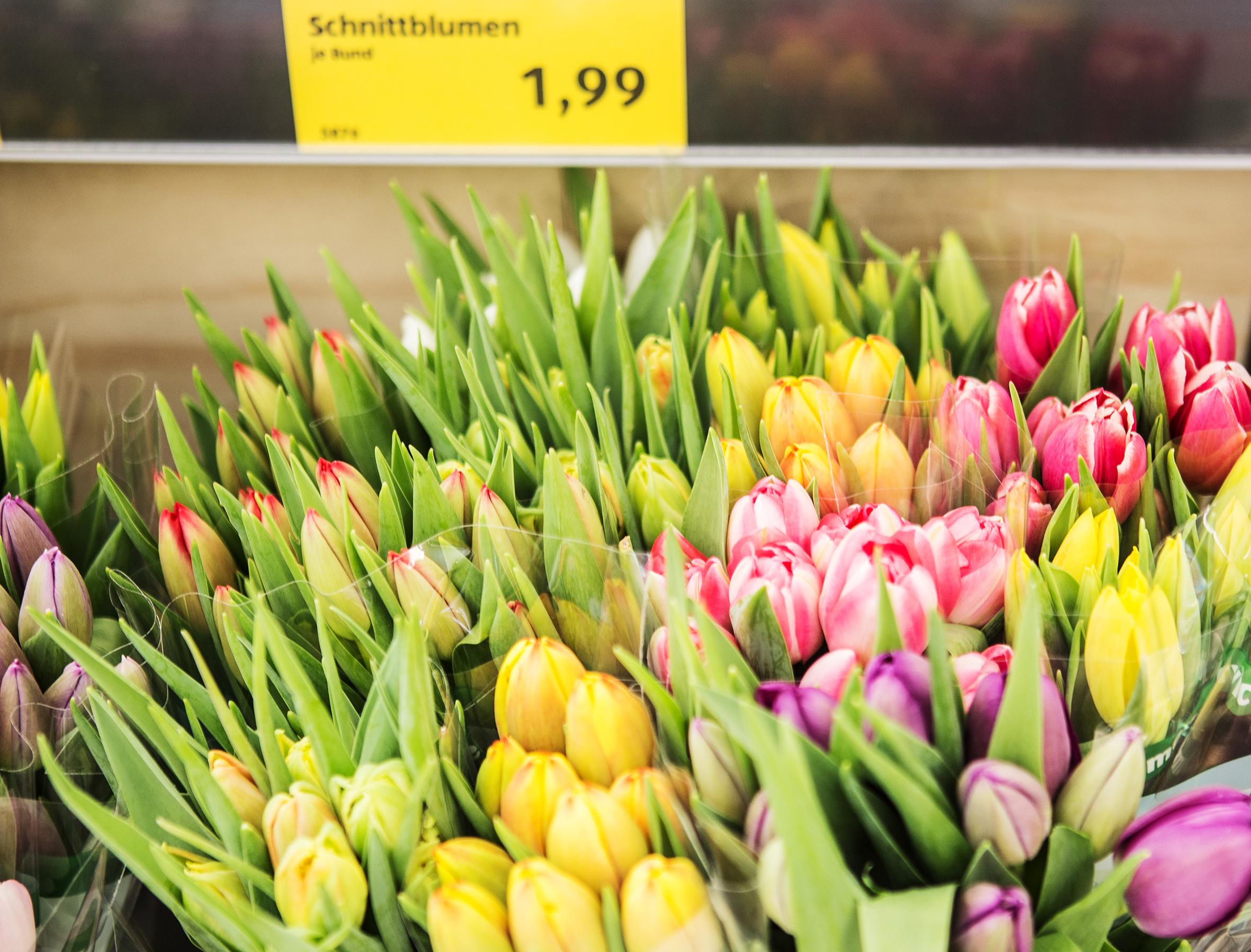 Blumen pflanzen  ALDI handelt nachhaltige Blumen und Pflanzen | Pressemitteilung ALDI