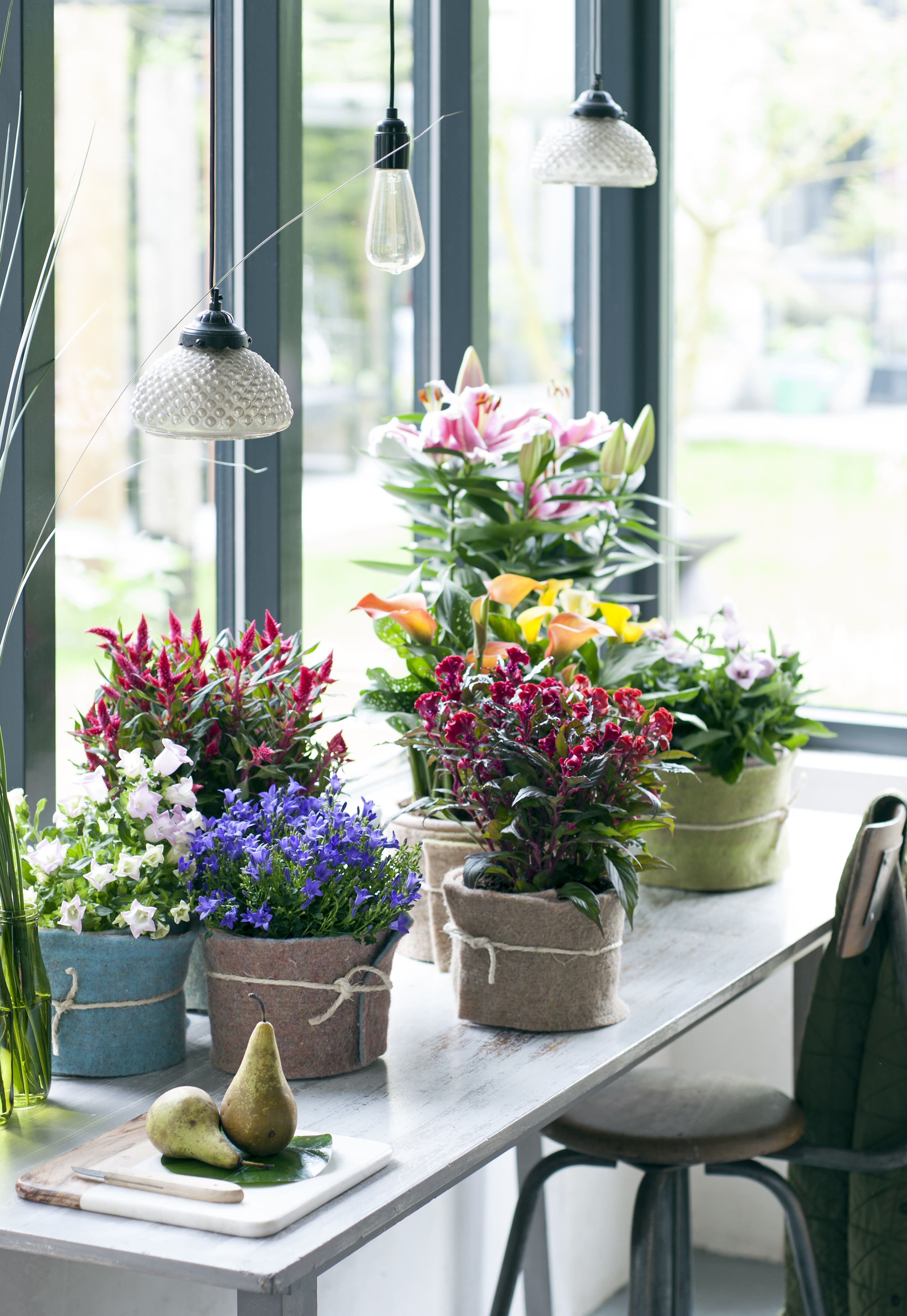 Grüne Nomaden sind Zimmerpflanzen des Monats Mai / Welche ...