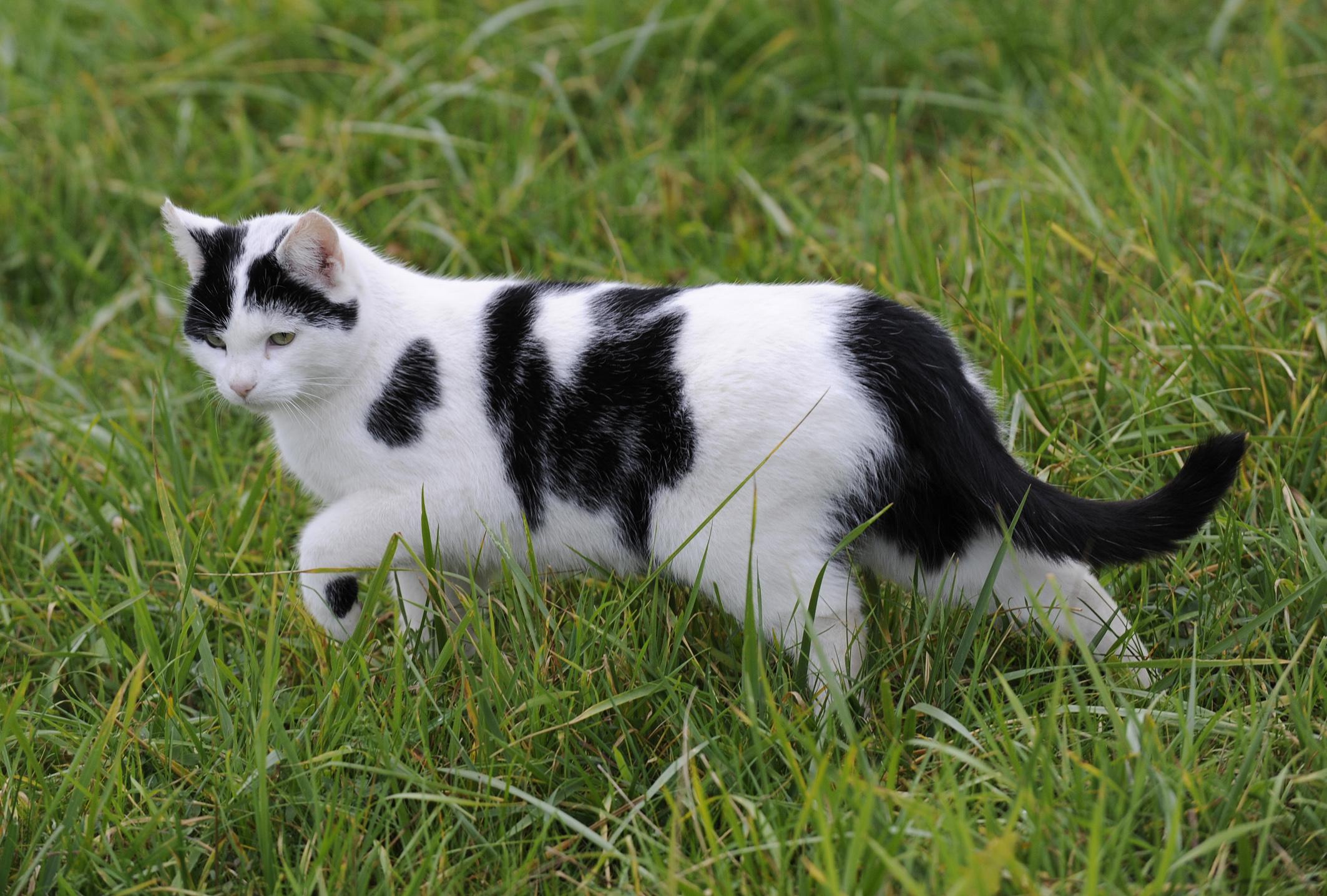 Katzen Ausmalbilder Warrior Cats : Ber Hmt Katze Anatomie Zeichnung Galerie Menschliche Anatomie