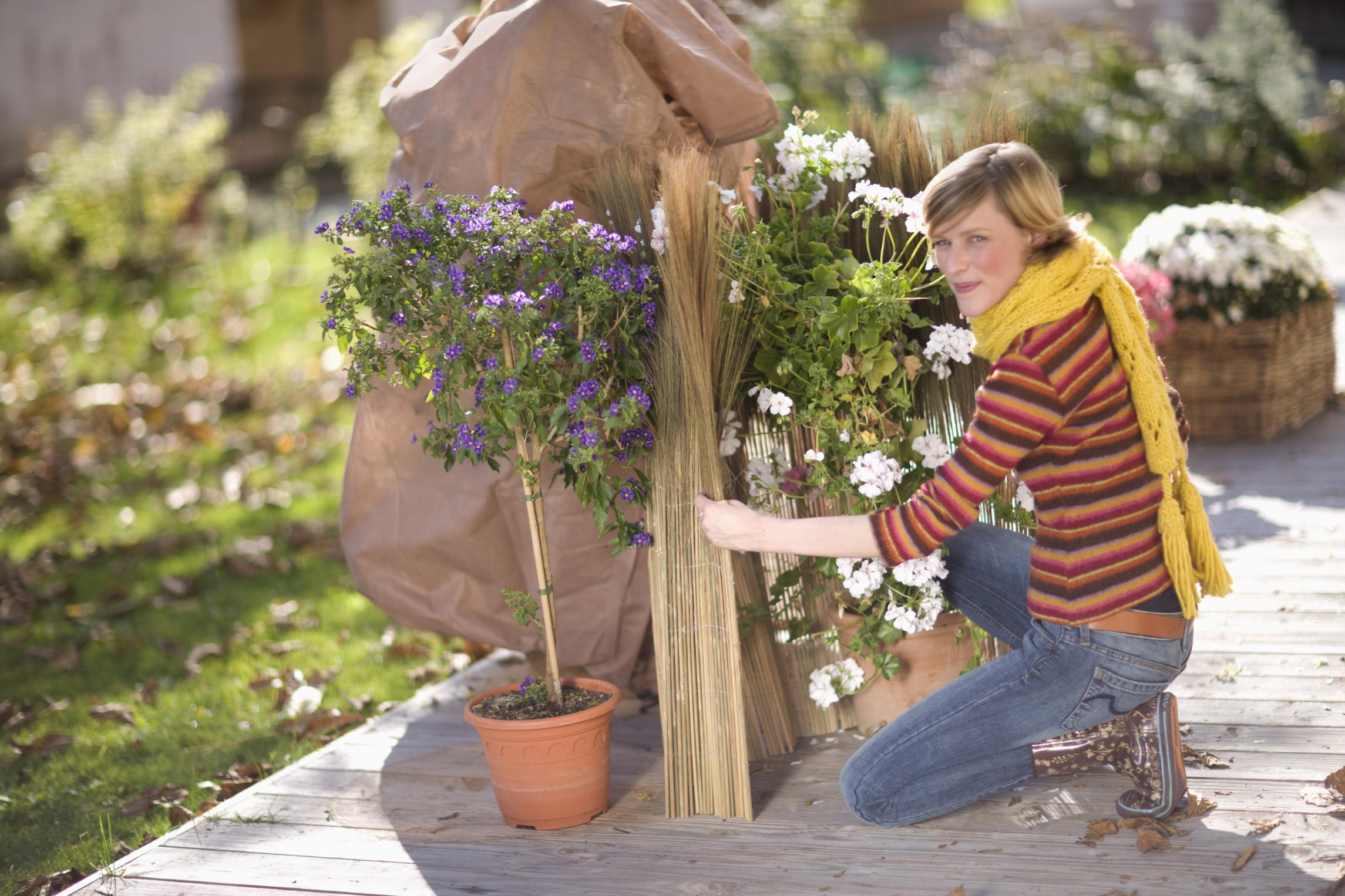winterschutz statt gartenfrust toom baumarkt gibt tipps wie pflanzen gartenm bel. Black Bedroom Furniture Sets. Home Design Ideas