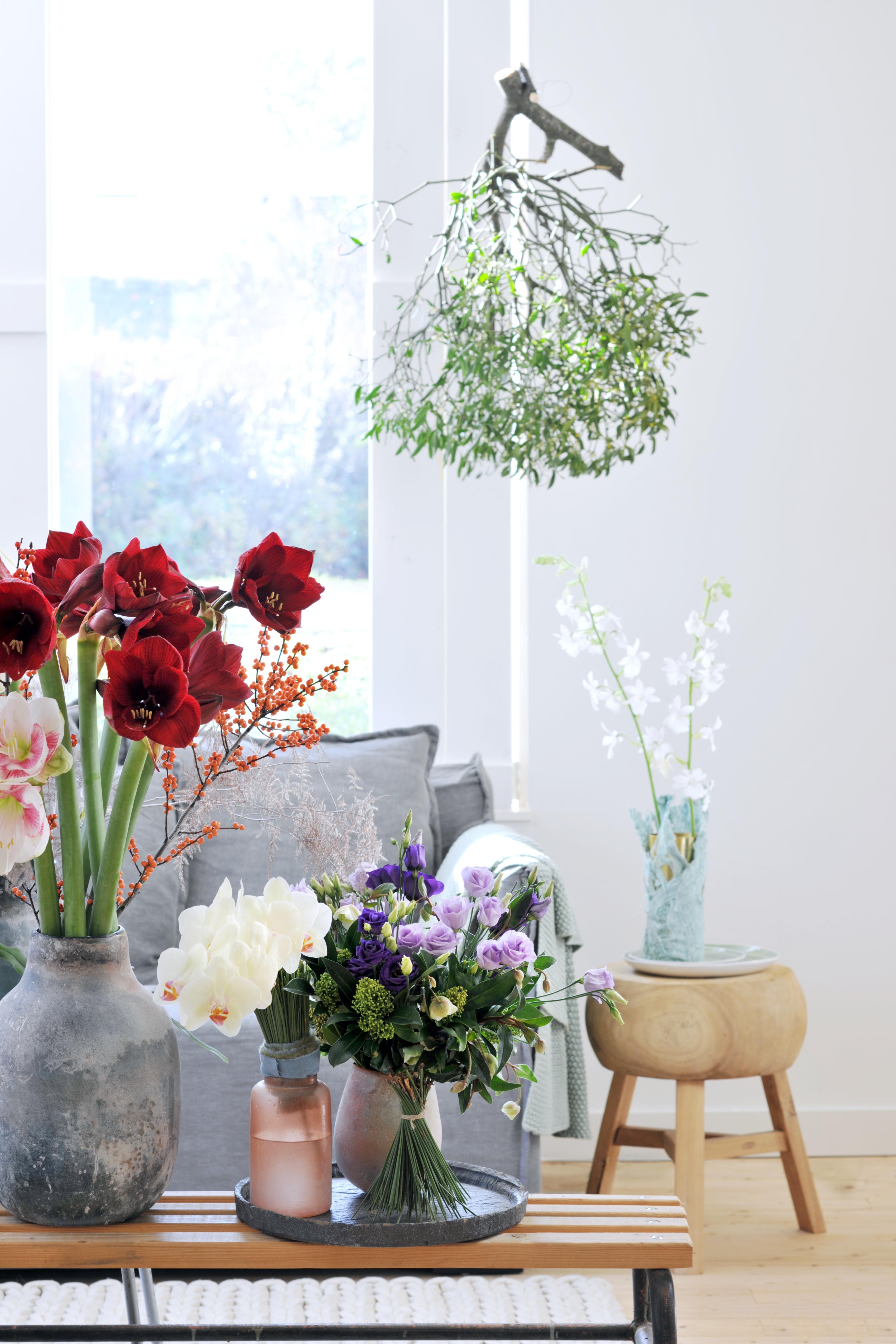 satte farbenpracht zum winterlichen interieur weihnachtliches arrangement aus amaryllis. Black Bedroom Furniture Sets. Home Design Ideas